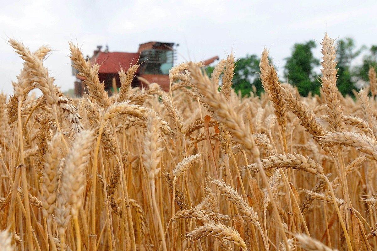 картинки урожая краснодарского края выпускаемые