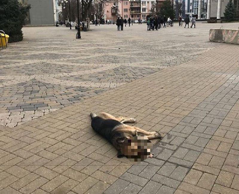 Краснодарский депутат нашел зверски убитую собаку наПушкинской площади