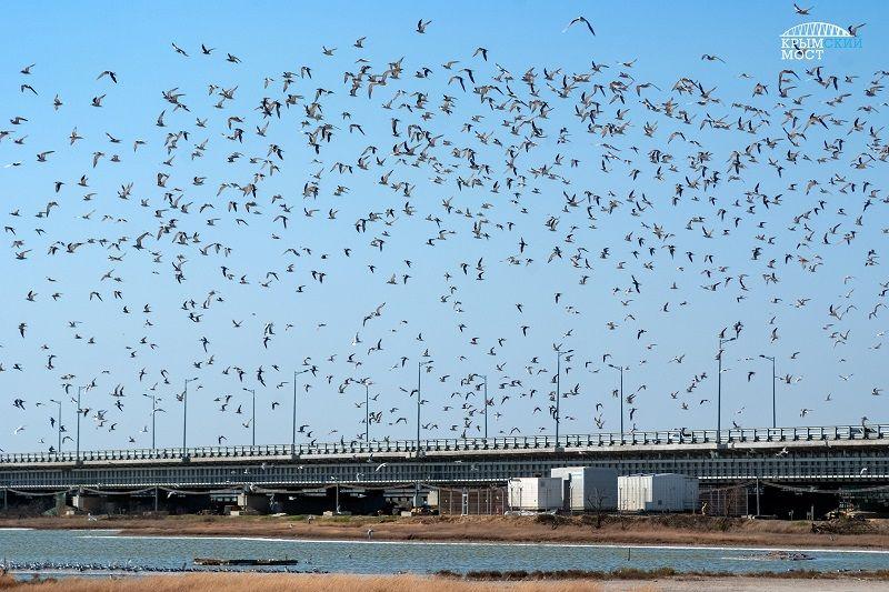 Рядом с Крымским мостом экологи установили гнездовья для птиц