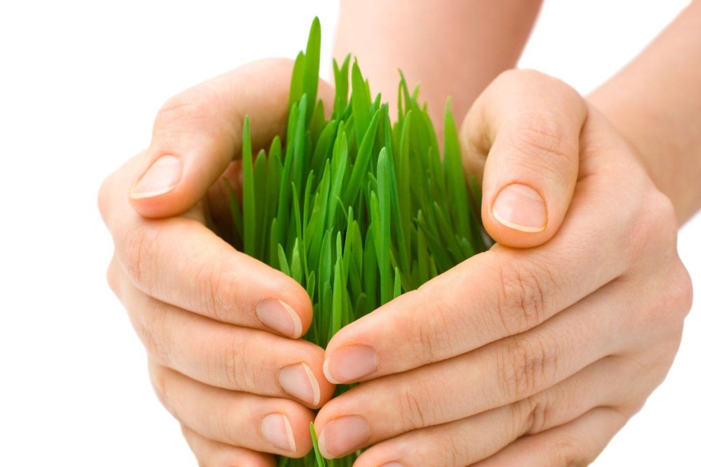 Экология сельского хозяйства картинки