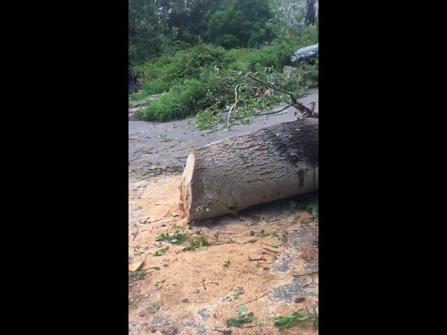 На Курортном проспекте в Сочи упало дерево