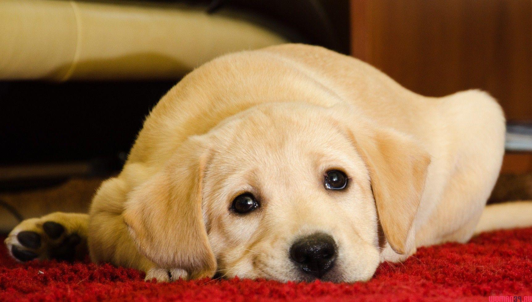 Гражданин Знаменского, выбросивший собаку сбалкона, попал под следствие