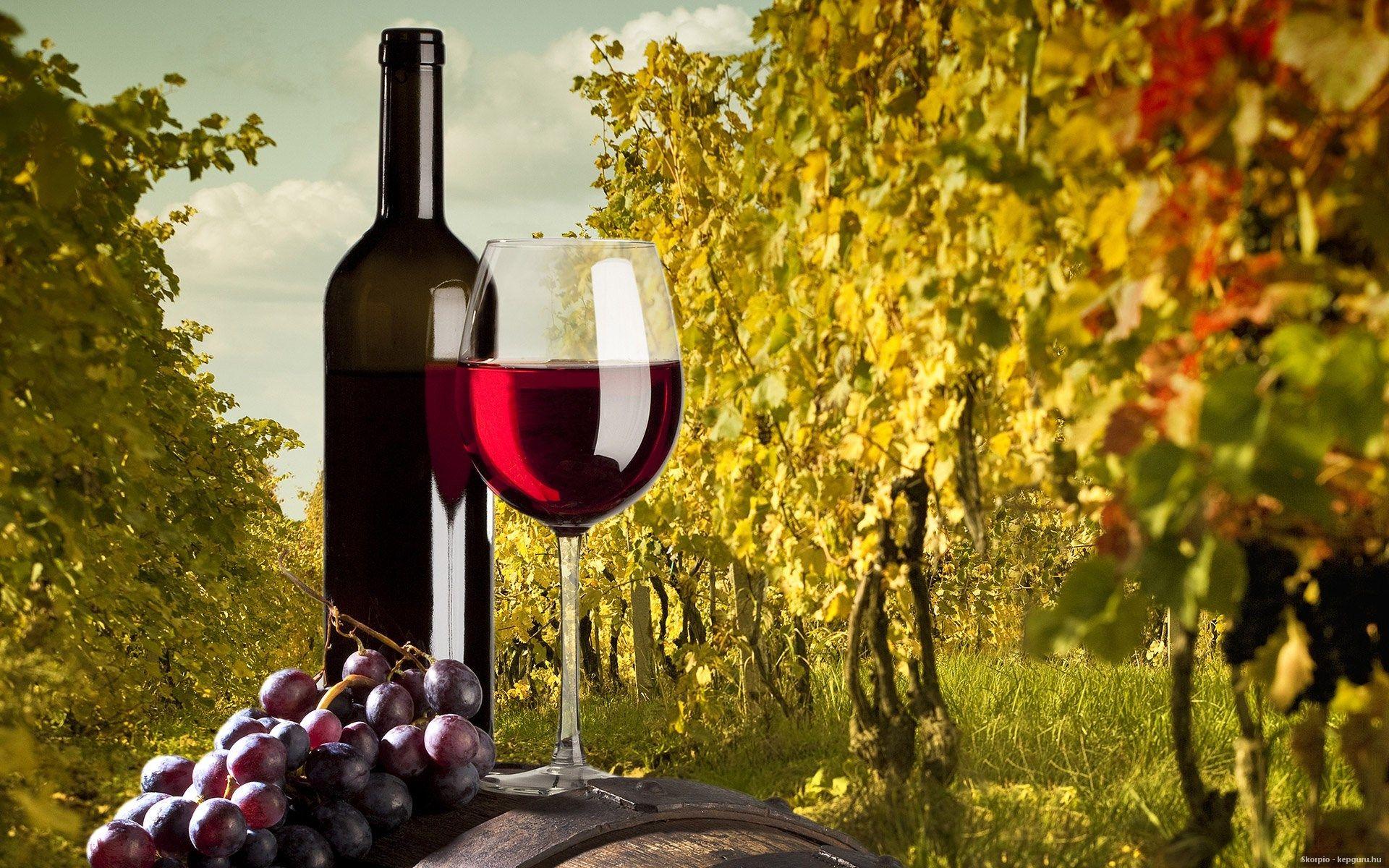 Минсельхоз хочет рекламировать вино на баннерах