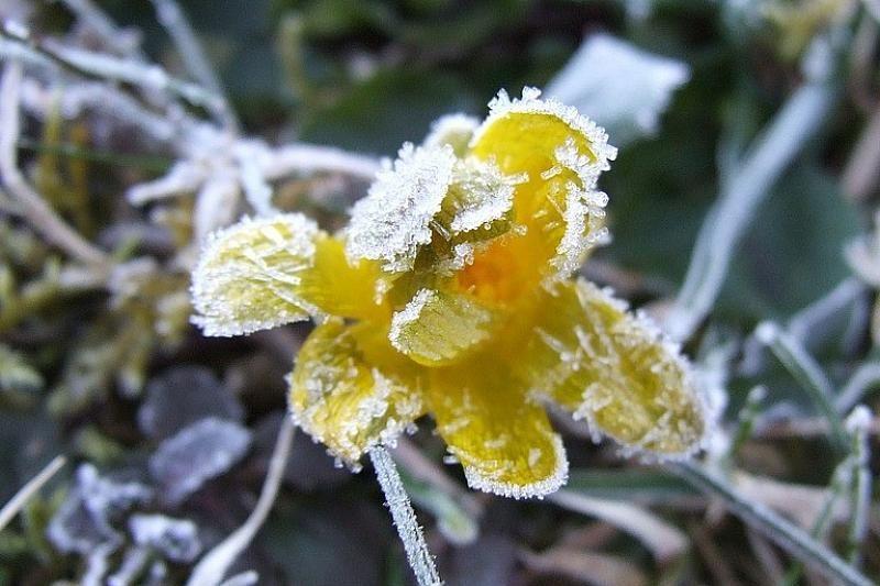 фото заморозков в сочи значительном протяжении