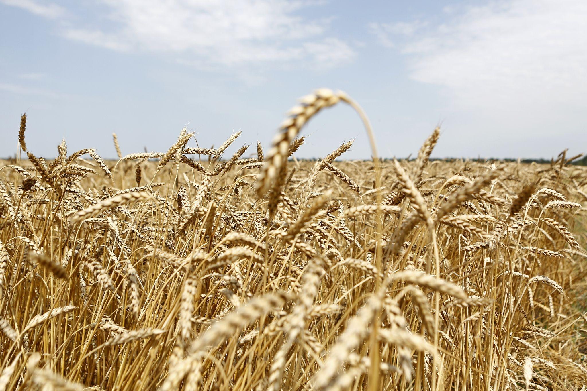 картинки урожая краснодарского края правильном уходе они