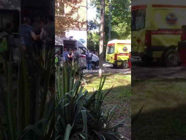 Дерево упало на территории детского сада в Краснодаре