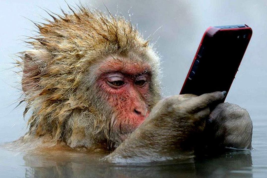Видео с листающей Instagram обезьяной стало хитом