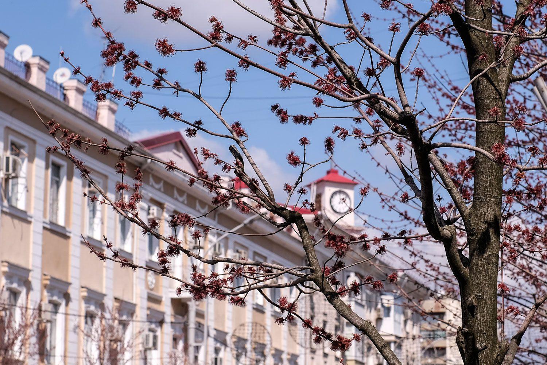 фото краснодара весной пройти