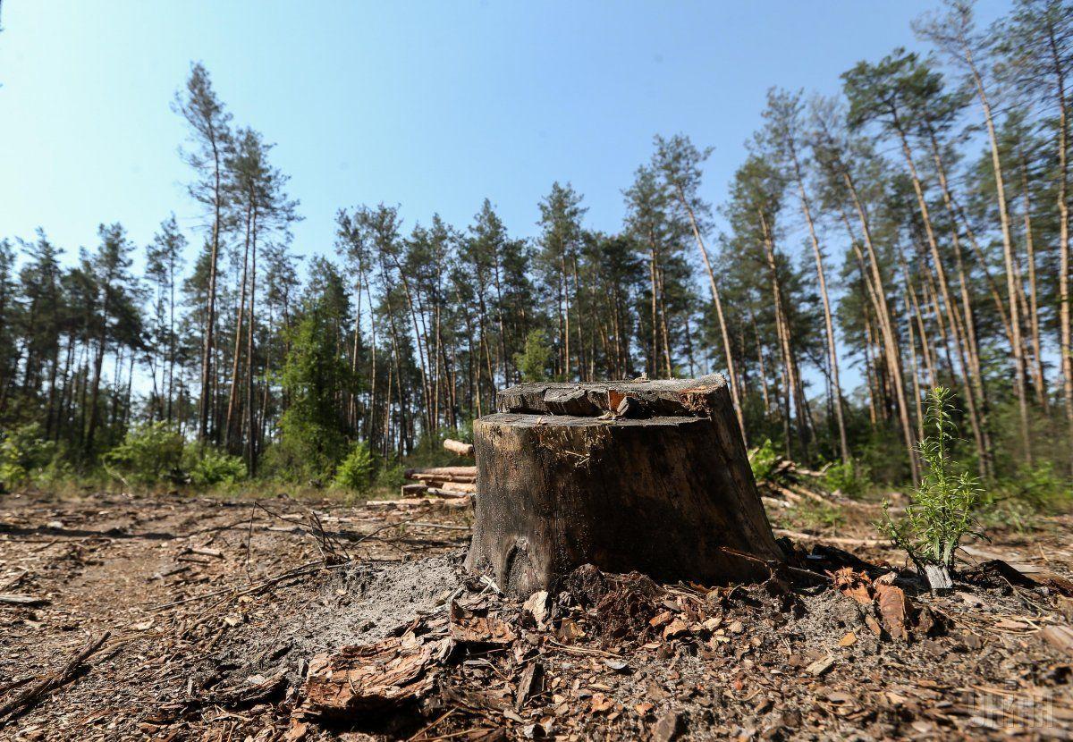 Житель Краснодарского края вырубил деревья на 21 млн рублей
