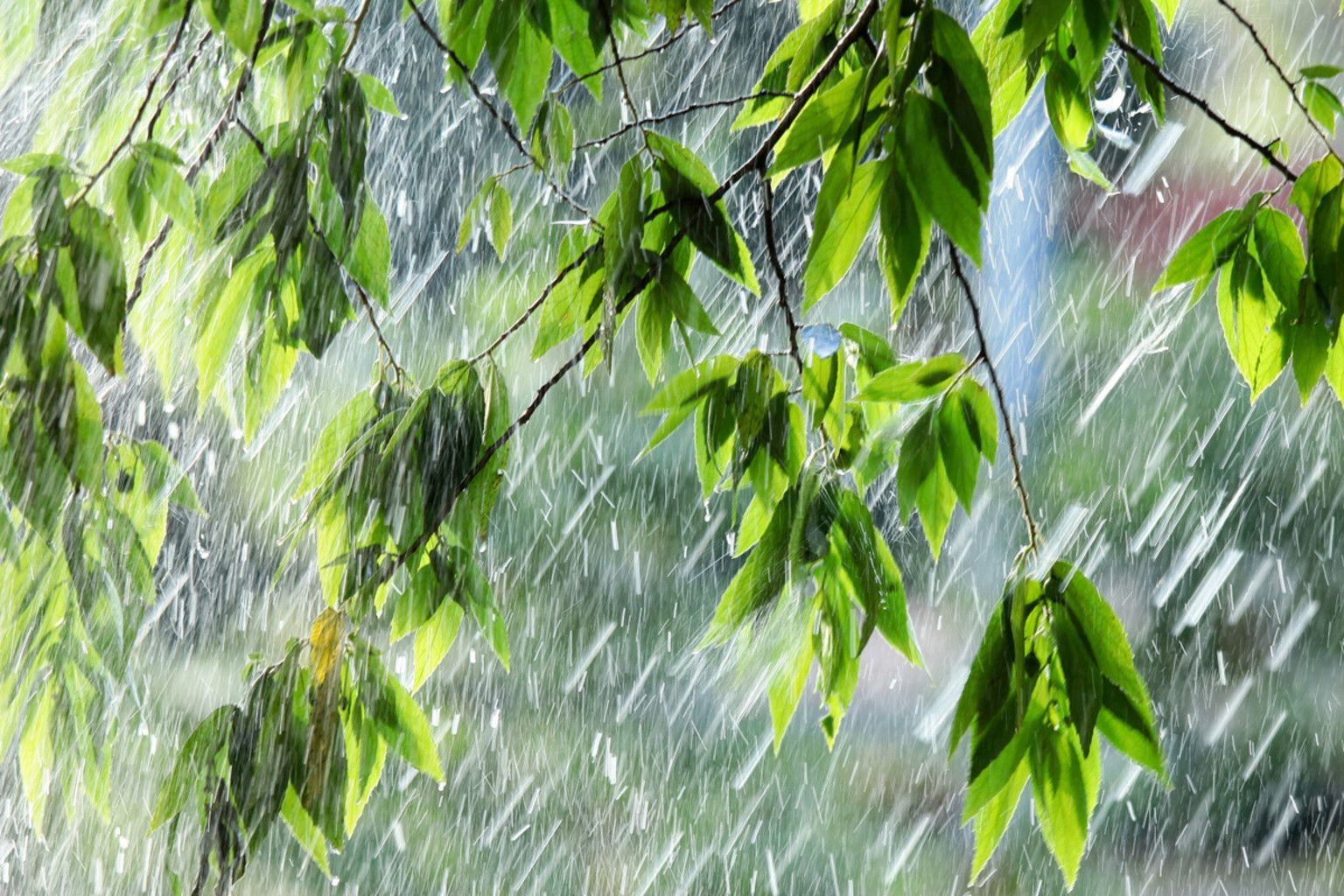 Явления природы картинки дождь