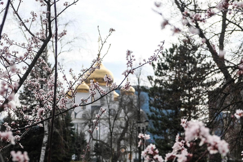Фотографии весны в краснодаре
