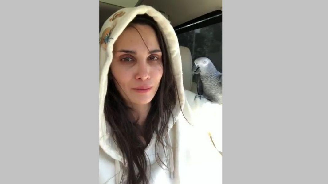 Супруга футболиста «Краснодара» заплатит 100 000 руб. запропавшего попугая