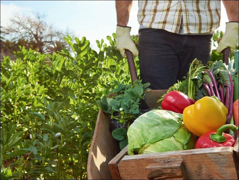 В Краснодарском крае производители экологически чистой продукции получат господдержку