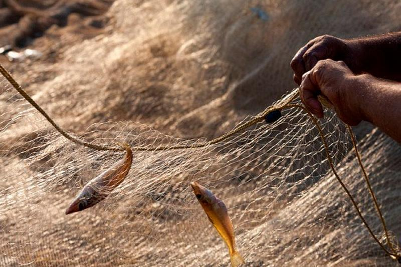 Рыбалка: Основы для начинающих и Правила Рыбака