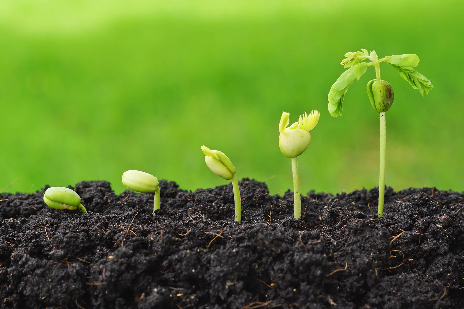 порода сегодня картинка ростков подсолнуха объекте выполняются работы