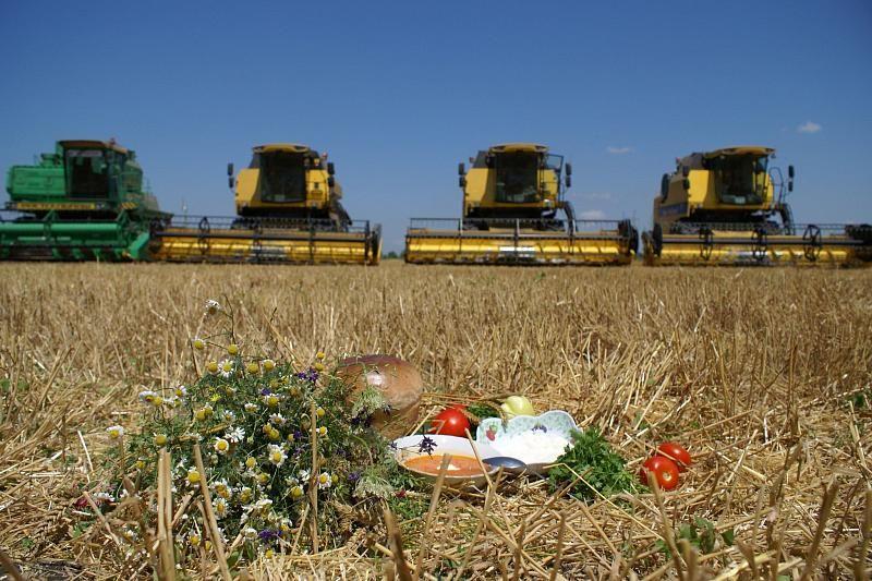 Какие сельскохозяйственные культуры выращивают на кубани?
