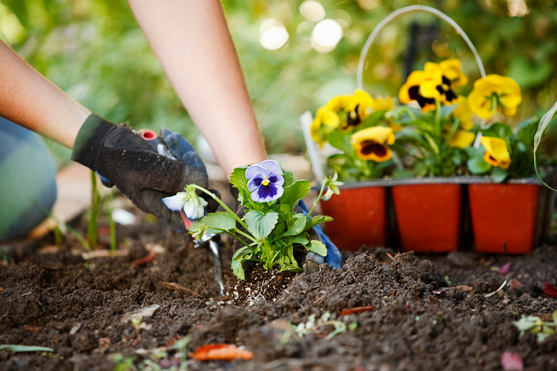 картинки клумбы сад и огородника нем будем