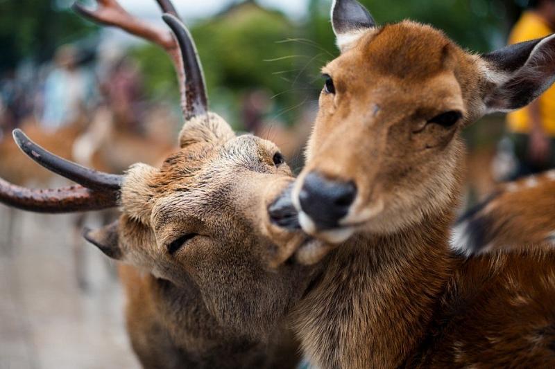 В Краснодарском крае ищут специалиста по уходу за оленями и мойщика летательных аппаратов