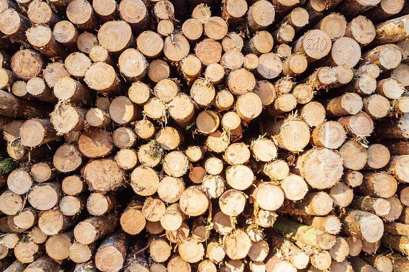 «Черные лесорубы» осуждены за уничтожение деревьев на 28 млн рублей