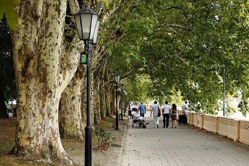 платановые деревья в сочи фото звуков каждого человека